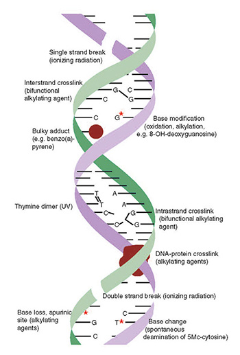 2 3 DNA  Damage Mindre Nd
